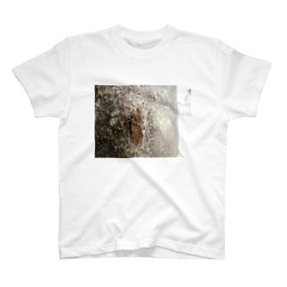 日本の昆虫:アブラゼミ Japanese large brown cicada T-shirts