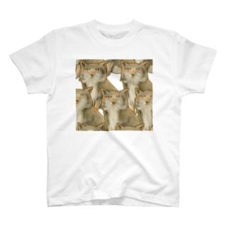 チベTシャツ T-shirts