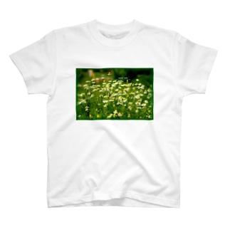 カモミール T-shirts