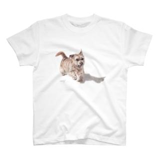 Momojiの犬画のノーフォークテリア31 T-shirts