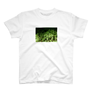 スギゴケちゃん T-shirts