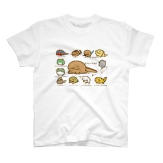 りょーせーるい&はちゅーるいず T-shirts