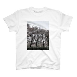 冬と春 T-shirts