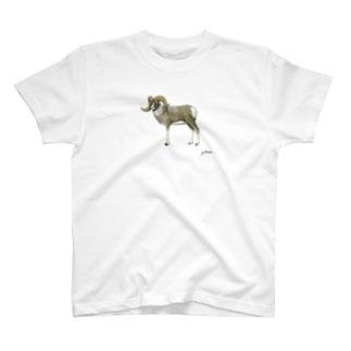 アルガリ T-shirts