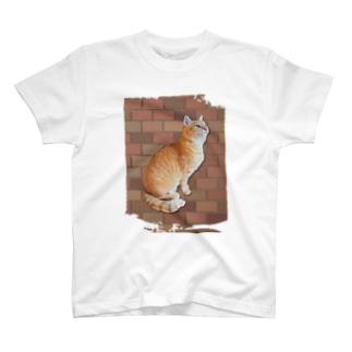 茶トラにゃんこ T-shirts