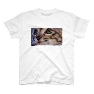 こねこ T-shirts