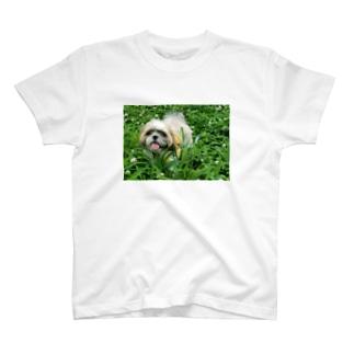 草原のレオくん T-shirts