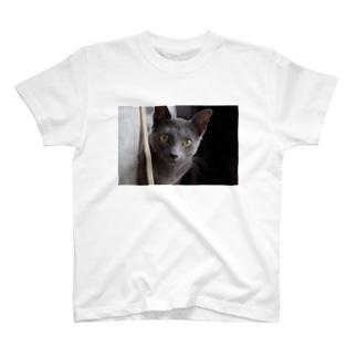若ねこにゃーさん T-shirts