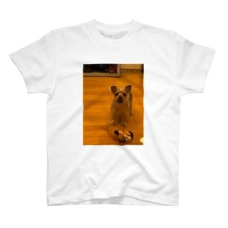 かんがるー T-shirts