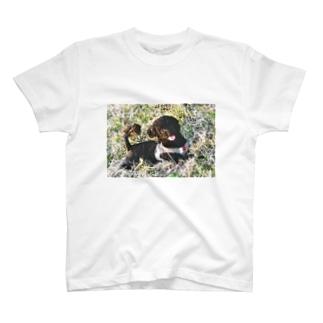 ピノちゃん T-shirts