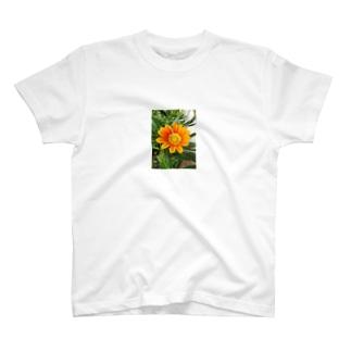 好日 T-shirts