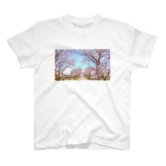 さくら20 T-shirts