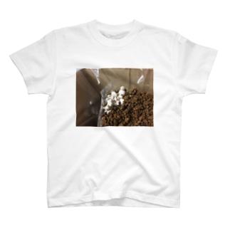 エリンギ T-shirts