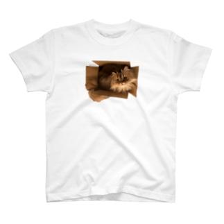 段ボールから猫ちゃん T-shirts
