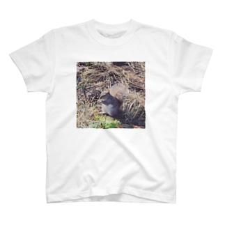 セントラルパークのリス T-shirts