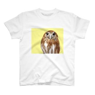 アカスズメフクロウ T-shirts