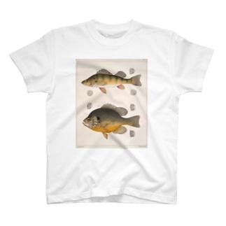 fishT T-shirts