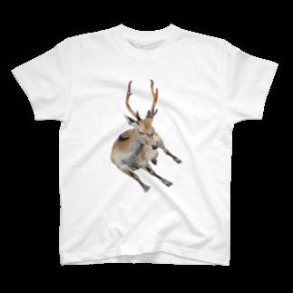 Yusuke SAITOHの鹿 Tシャツ