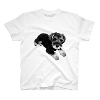 ミニシュナちゃん T-shirts