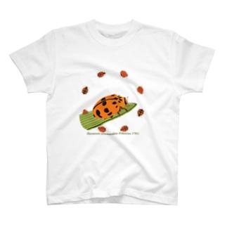 ヤホシテントウ T-Shirt
