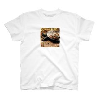 亀 T-shirts