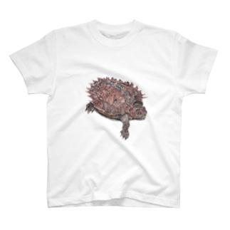 トゲヤマガメ Heosemys spinosa T-shirts