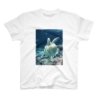 美ら海亀ちゃんTシャツ T-shirts