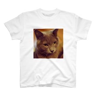 Bush615のぶーにゃん♡ T-shirts