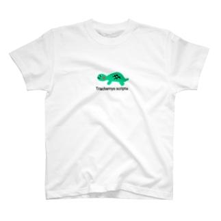 亀さん T-shirts