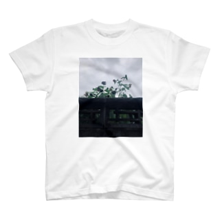 焦げた夏 フォトティシャツ T-shirts