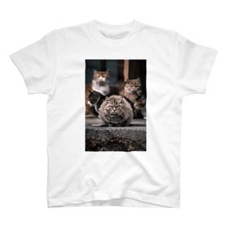 ネコザイルシャツ T-shirts