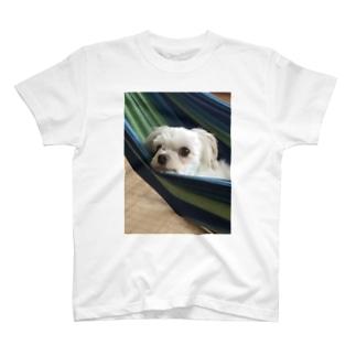 うちのいぬ 24 T-shirts