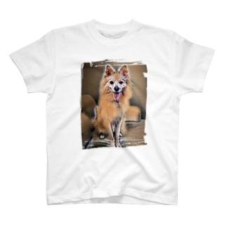 ポメラニアンに見えないポン太 絵画 T-shirts