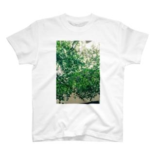 緑 T-shirts