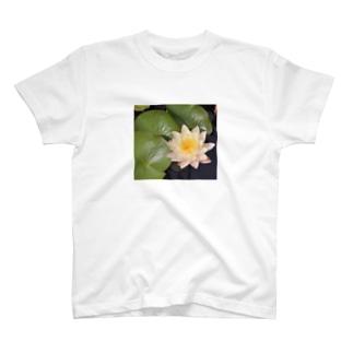 黄色いハス001 T-shirts