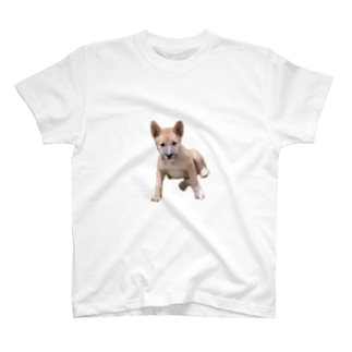 犬001 T-shirts