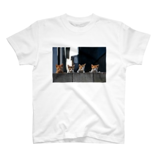 kitten gang T-shirts