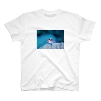 ちっちゃい魚 T-shirts