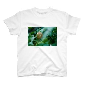 ほおずき T-shirts