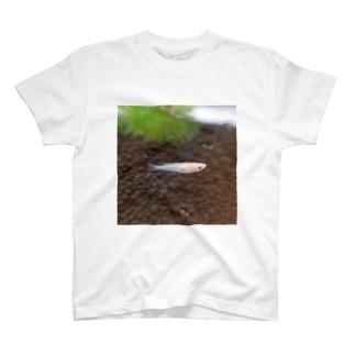 チーク&リップ めだか T-shirts