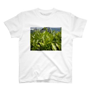 2014八女の新茶 T-shirts