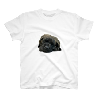 TORAJI T-shirts