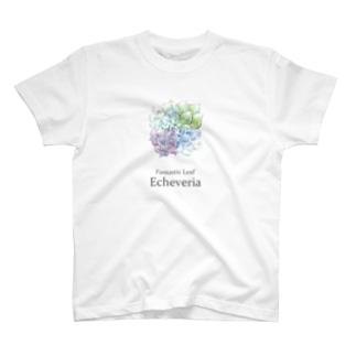 T-29 Fantastic Leaf Echeveria T-shirts