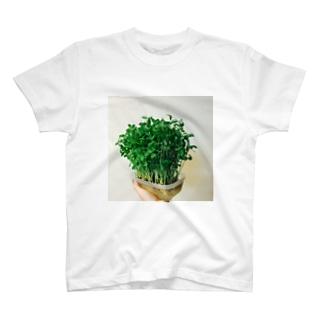 豆苗7日目 T-shirts