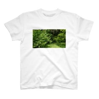 写真集 T-shirts