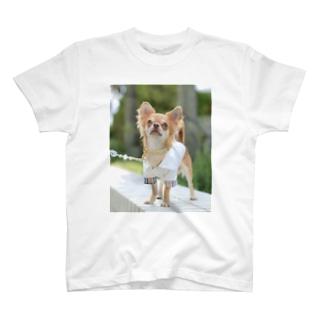 湘南にゃんわんふぉと🐶の愛犬グッズ(sampleご購入不可) T-shirts