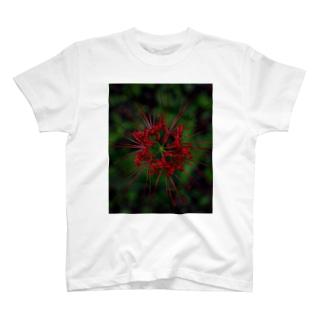 かごしまエモいぜの彼岸花2 T-shirts