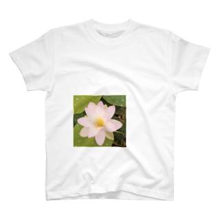 LOTUS ONE T-shirts