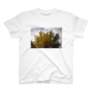 秋と直線 T-shirts