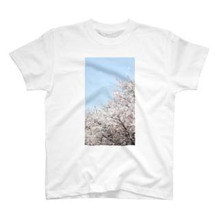 桜 T-Shirt